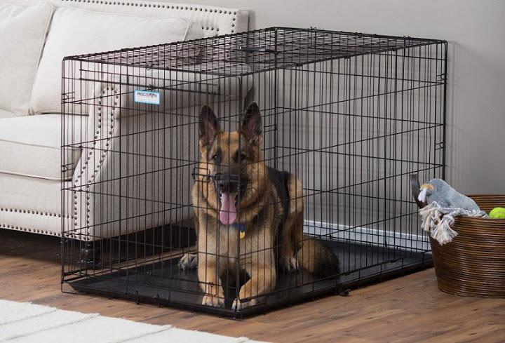 Cách huấn luyện chó ở trong chuồng thực hiện đơn giản tại nhà