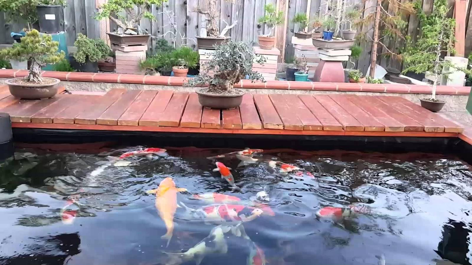 Top 10 địa chỉ thiết kế hồ cá koi nhanh chóng, giá rẻ tại Tphcm